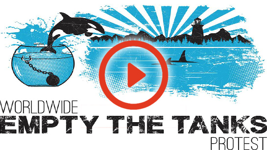Empty the tanks 2014 full video edit